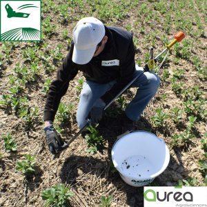 pilotage-fertilisation-analyse-sols