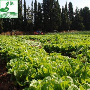 Phytos légumes
