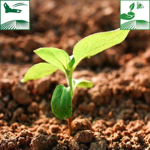 picto protection vegetale 102017 500x500 - Guide protection végétale automne 2017