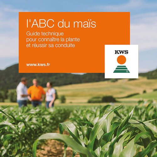L'ABC du maïs