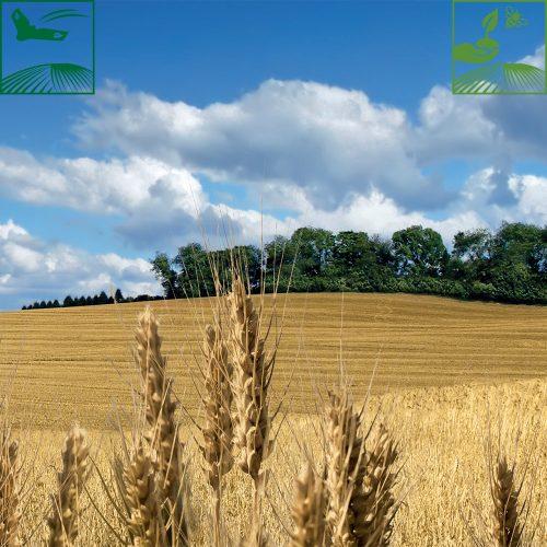 Guide de protection végétale pour vous accompagner dans vos décisions et prévoir ensemble les meilleures solutions pour assurer la rentabilité de vos productions.