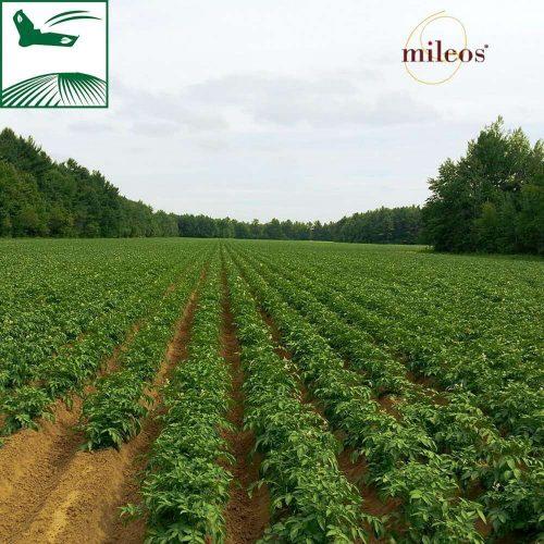 Mileos® - partenaire anti-mildiou