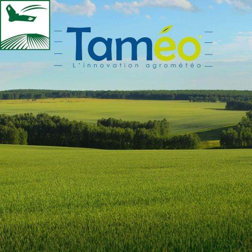 Taméo