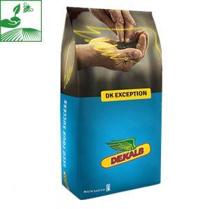 semences colza dk exception 300x300 - DK EXCEPTION