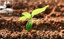 ppf rp - Plan de fumure et registre phytosanitaire