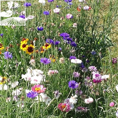 semences engrais vert pronectar 500x500 - I-SOL PRONECTAR