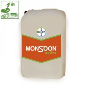 MONSOON ACTIVE