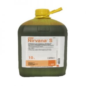 NIRVANA S