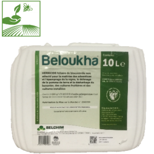 beloukha 300x300 - BELOUKHA