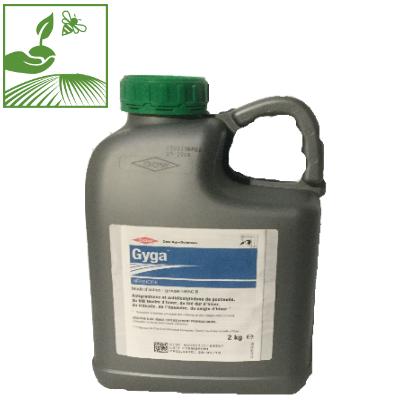 gyga - GYGA