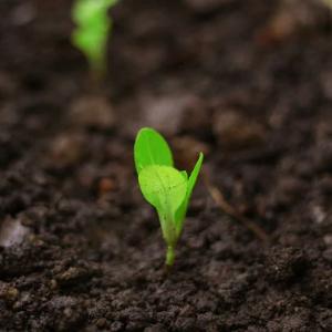 Plan de fumure et registre phytosanitaire